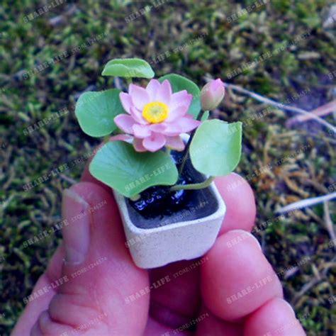 lotus flower seed buy wholesale lotus flower seeds from china lotus
