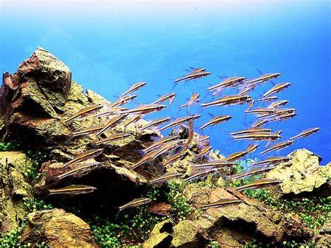 aquarium design amano indonesia 17 best images about freshwater aquariums on pinterest