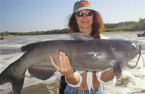 world cat boats canada fishing in canada for channel catfish fishing red river