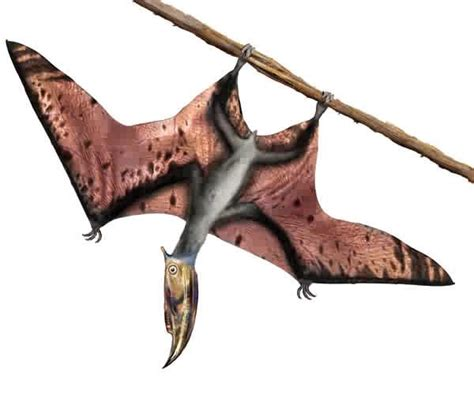 dinosauro volante pterodactyle tout conna 238 tre sur les reptiles volants