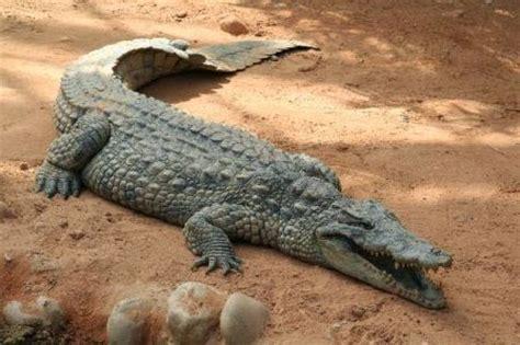 imagenes animales que reptan los animales terrestres los animales terrestres
