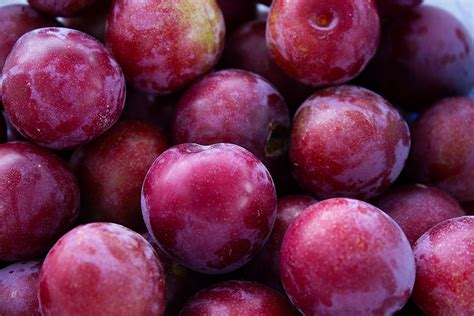 rurification plum bounty
