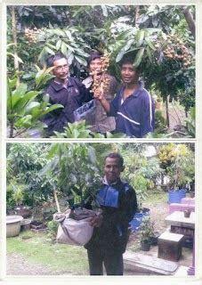 Bibit Kelengkeng Jendral jenis jenis kelengkeng kelengkeng aroma durian dan