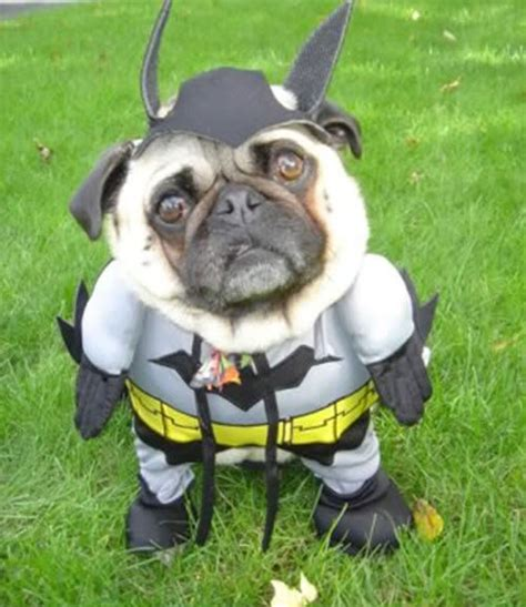 pug says batman pug says batman your meme