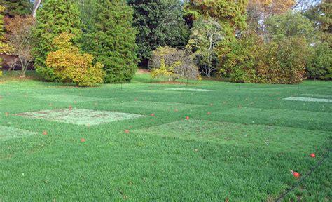 Grass Garden by Finding A Quot Greener Quot Grass Longwood Gardens