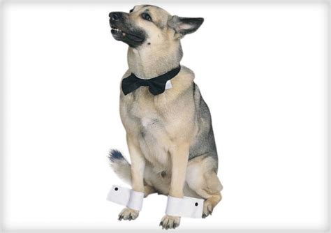 where can you buy a puppy you can buy costumes for dogs askmen