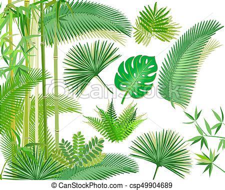dschungel pflanzen dschungel pflanzen exotische tropische betriebe