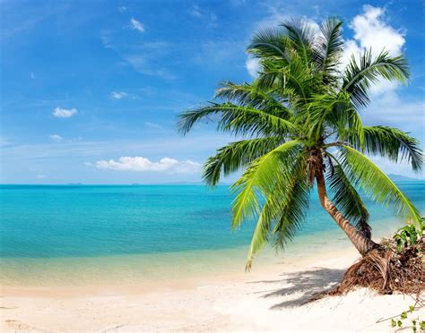 most beautiful beaches pictures to pin on pinterest pinsdaddy beautiful tropical beach happiness pinterest