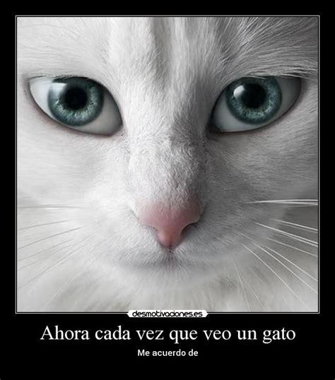 10 pensamientos que tiene tu gato cada vez que apareces ahora cada vez que veo un gato desmotivaciones