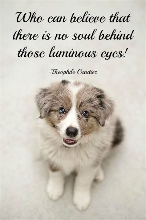 puppy sayings 428 best images about quotes and proverbs on