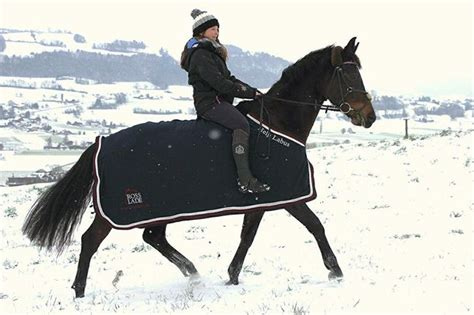 decke pferd kleiner neujahrswettbewerb schickt eure fotos der quot help