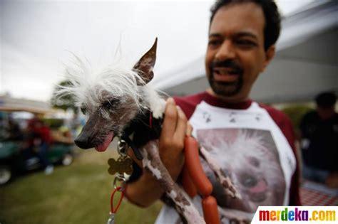 kontes tattoo di indonesia foto kontes anjing terjelek di dunia merdeka com