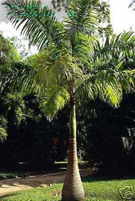 palm tree תמונות הספרייה