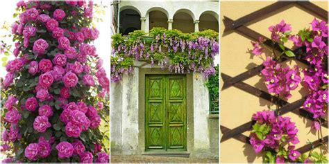fiori da balcone perenni fiori da balcone creare uno spazio green roba da donne
