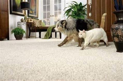 Rug Cleaning Franklin Tn by Professional Carpet Cleaning Service Franklin Tn Franklin Carpet Cleaning