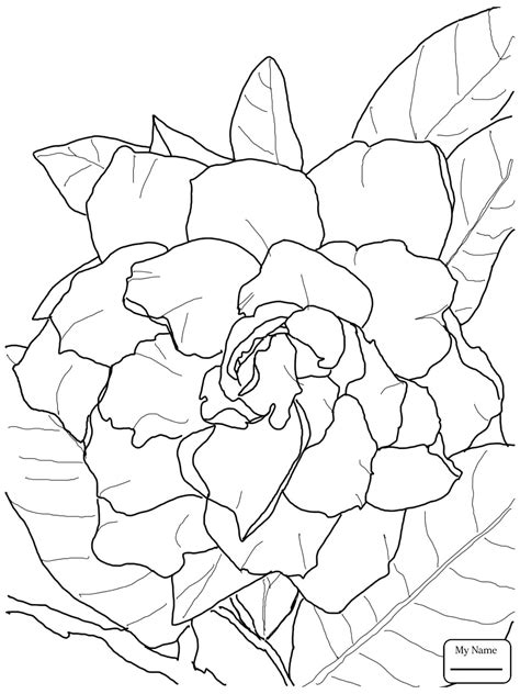 coloring pages of jasmine flower awesome jasmine flower coloring pages design printable