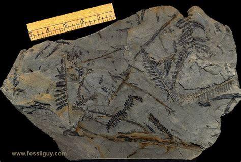 tropical plant fossils tropical plant fossils home design inspirations