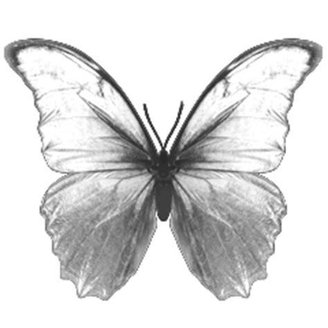 butterfly tattoo until dawn platine 83 until dawn