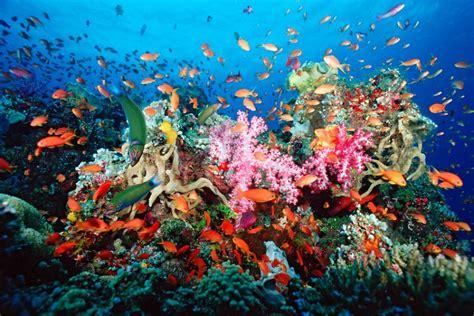 visits  natural history museums coral