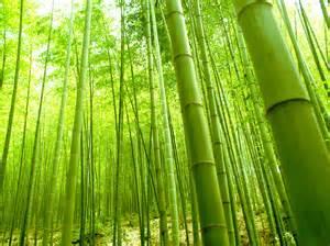 Bamboo Wall Mural bamboo wall mural related keywords amp suggestions bamboo wall mural