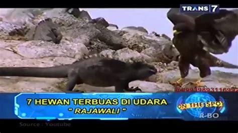 film hantu versi on the spot hewan lucu 2016 hewan teraneh di dunia versi on the spot