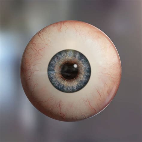Real Human Brains With Eyes Www Imgkid Com The Image Eyeball Pics