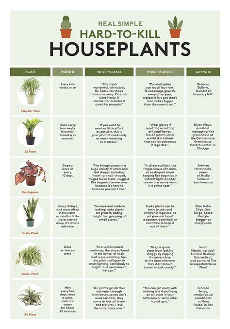maintenance houseplants  maintenance