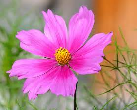 pretty flower flickr photo sharing