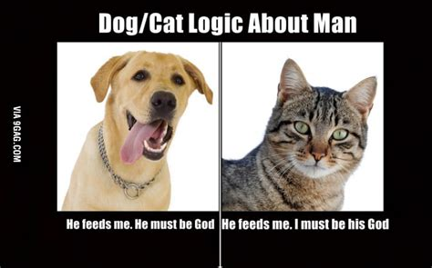 Dog Logic Meme - dog vs cat logic 9gag
