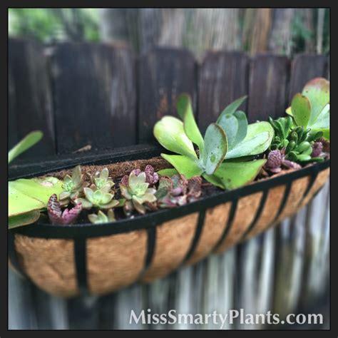 planters for succulents succulent planter windowbox miss smarty plants