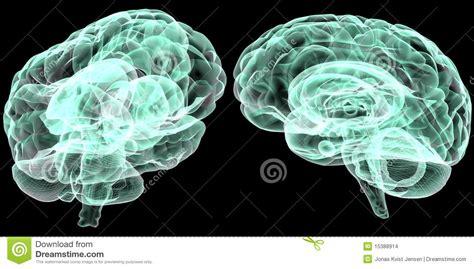 brain x human brain x stock images image 15388914