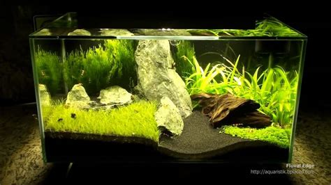 fluval aquascape fluval edge aquarium review aquatic mag