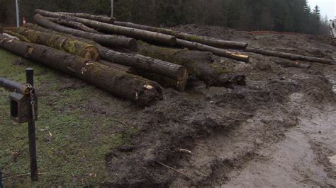 Landscape Timbers Vancouver Environmentalists Barking Mad After Surrey Downs Dozens Of