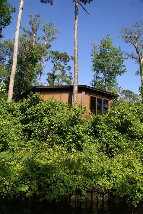 disney saratoga springs villas reviews new treehouse villas buildings photo 2 of 6