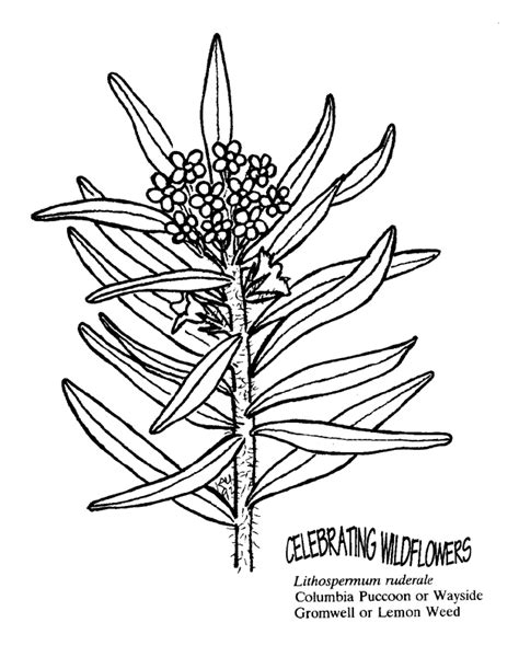 trippy marijuana coloring pages printable coloring pages