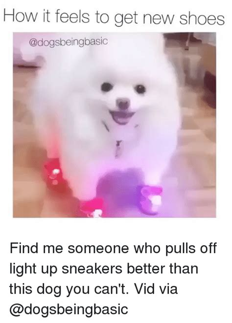 light up dog shoes 25 best memes about better than this better than this memes