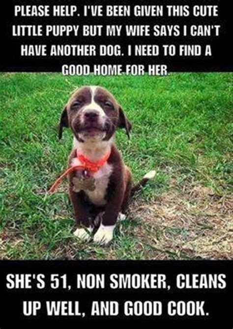 Dog Cooking Meme - best 25 wife memes ideas on pinterest wife memes funny