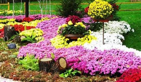 22 floral installations and landscaping ideas with mums celebrating fall colors