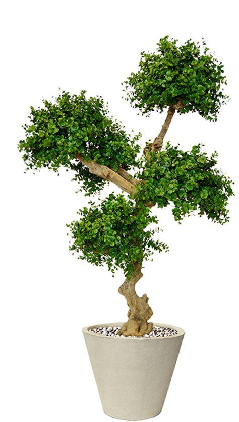 Piante Ornamentali Da Salotto by Storebm Eu Piante Artificiali Di Altissimo Livello