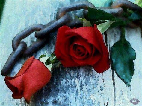imagenes tristes flores im 225 genes tristes de rosas imagui