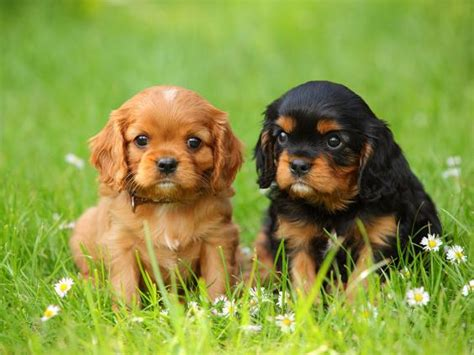 how do small dogs live a pet is for so which is best for you the independent