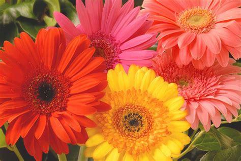 imagenes de flores varias 10 hermosas flores silvestres 1001 consejos