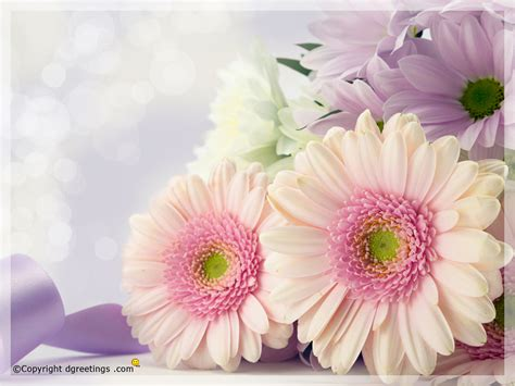 Flowers Images - flowers wallpapers of different sizes free flowers