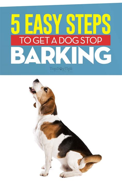 how to get dog to stop barking how to get a dog to stop barking 5 most effective methods