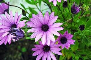 Garden Flowers Pictures And Names Garden Flower Names Maydae I M Bad At Flower Names Garden Flowers Names