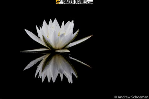 flower wallpaper national geographic top national geographic wallpaper flowers wallpapers
