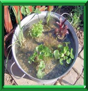 mini jardin aquatique coup de pouce