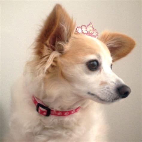 tiara puppy princess tiara barrette