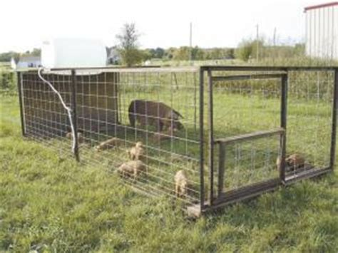 How To Raise Pigs In Your Backyard Farm Show Quot Tractors Quot Make Raising Pastured Pigs Easy