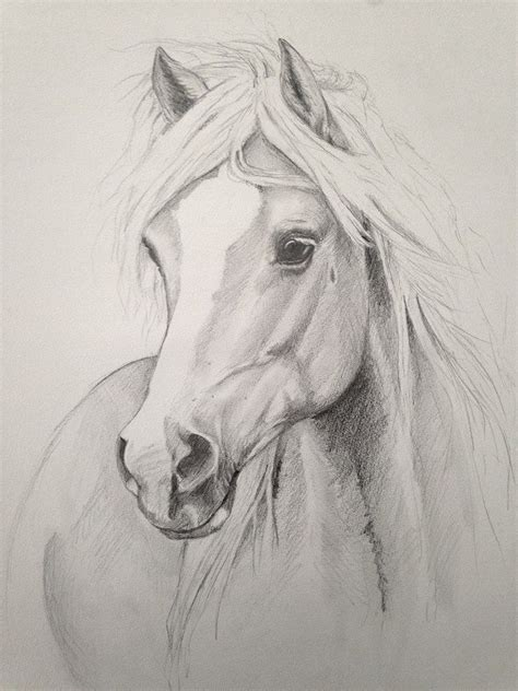 Sketches Horses by Beautiful Drawing